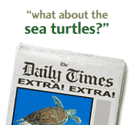 What about the Sea Turtles?